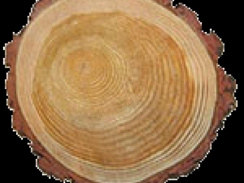 Породы наиболее востребованной для строительства домов древесины